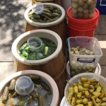 Pickles varities in outdoor markets